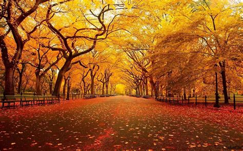 Autumn Themed Wallpapers For Android by 57 Thanksgiving Wallpapers On Wallpaperplay