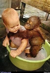 Baby & Orangutan Bath Meme Generator - Captionator Caption ...