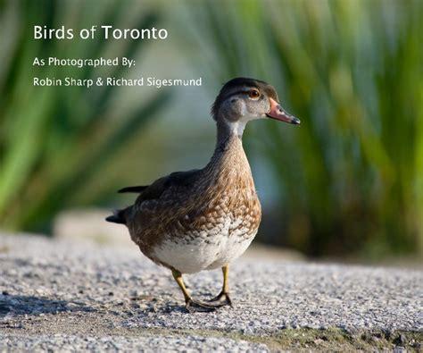 birds of toronto by robin sharp richard sigesmund fine