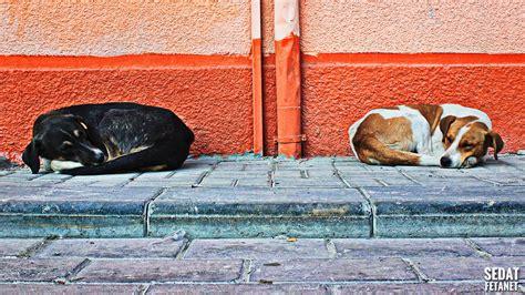 Animal Wallpaper For Walls - animals turkey walls sleeping wallpapers