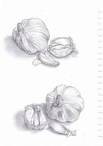 Garlic Drawings | www.imgkid.com - The Image Kid Has It!