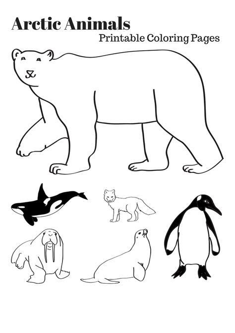 Arctic Animals Coloring Pages Printable