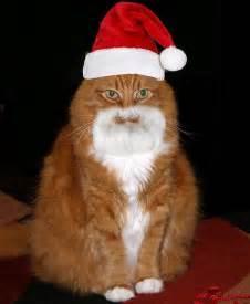 cat santa hat cats santa cat pictures