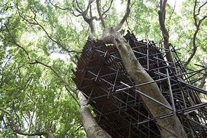 A birds nest tearoom perched atop a 300 year old camphor for Birds nest tearoom japan