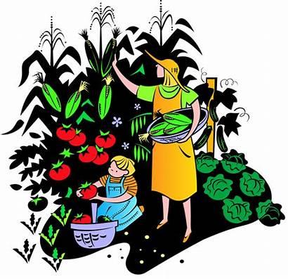 Clipart Clip Garden Vegetable Crops Farm Crop