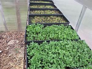 Growing Microgreens Indoors FARMYARDS