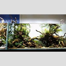 Aquascape 'grand Wood' Youtube
