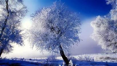 Christmas Background Winter Desktop Scene Backgrounds Scenes