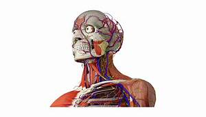 Bizarre Human Body Medical Facts You May Not Know
