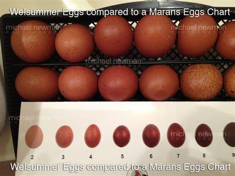 Welsummer Egg Color Chart