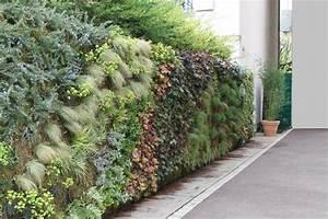 Mur Vegetal Exterieur : mur v g tal ext rieur installation de murs v g taux en ~ Melissatoandfro.com Idées de Décoration