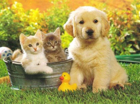 fond d écran mignon mignon fond d cran images fond d cran gratuit chien mignon fonds d cran animaux gratuits chien