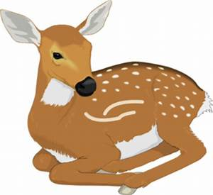 Baby Fawn Clipart