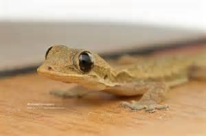 Cute Baby Lizards
