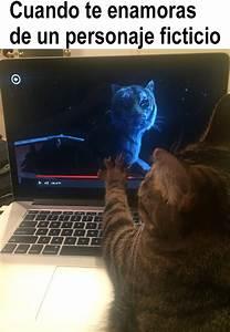 21 divertidos memes de gatos que te harán decir ese soy yo