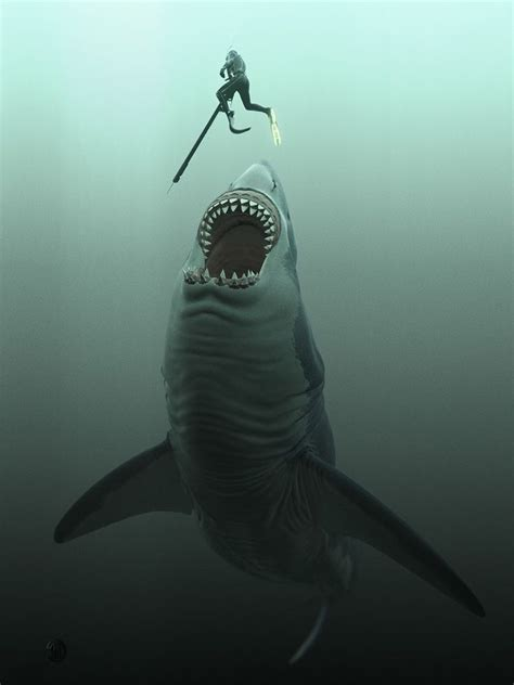 mooi photo shark pictures megalodon shark