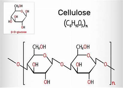 Cellulose Polysaccharide Formula Molecule Chemical Celulosa Structural
