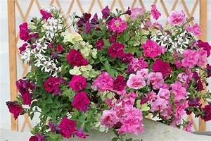 Jardiniere Fleurie Plein Soleil : balcon fleuri plein soleil l 39 atelier des fleurs ~ Melissatoandfro.com Idées de Décoration
