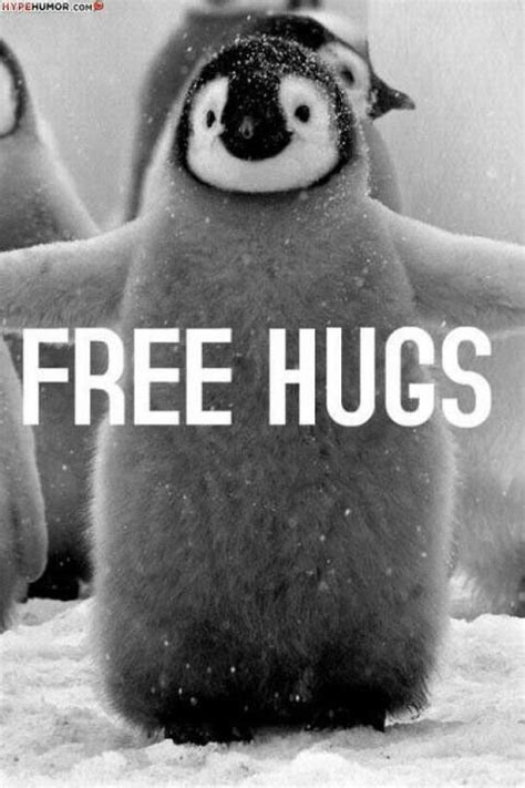 Cute Penguin Meme - 1000 images about penguins on pinterest african penguin pets and dolphins