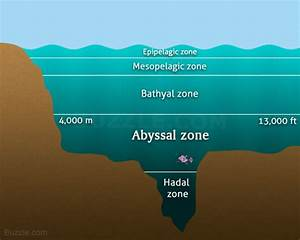 Interesting Facts About The Abyssal Zone That U0026 39 Ll Startle You