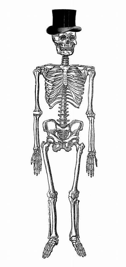 Skeleton Halloween Clip Clipart Fancy Hat Skeletons