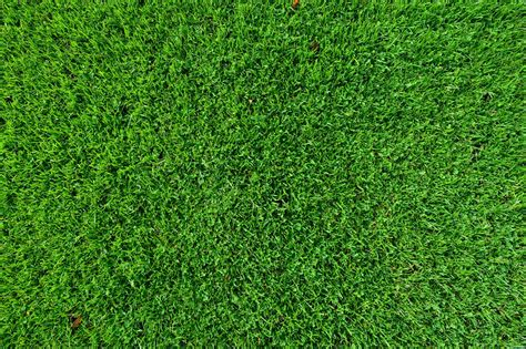 Leaf, Grass, Lawn, Green Grass, Green