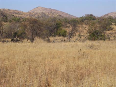 chaises habitat chaise pliante africa habitat palzon com