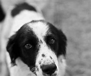 black and white | Hobos Landing