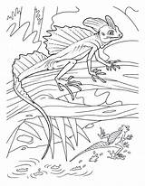 Lizard Basilisk Coloring Pages Colouring Cartoon Lizards Adults Printable Adult Animals Animal Reptile Reptiles Print Sheets Para Creepers Colouringpages Crawly sketch template
