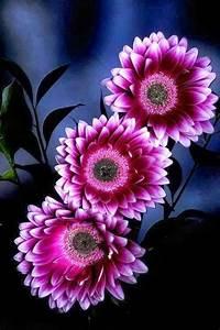 good night flowers | cassy like it | Pinterest | Flowers ...