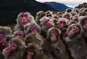Story Of Villagers Who Were Duped Into Monkey Business