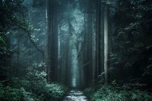 Nature, Landscape, Photography, Forest, Dark, Path, Fall