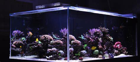 led aquarium beleuchtung nachteile aquarium led beleuchtung erfahrung aquapro2000