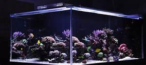 Aquarium Led Beleuchtung : aquarium led beleuchtung erfahrung aquapro2000 ~ Frokenaadalensverden.com Haus und Dekorationen