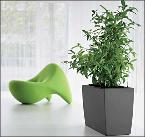 best small indoor plants low light large office plants office furniture