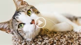 www cat cats protection cat care