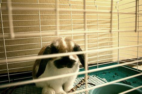 Coniglio In Gabbia - conigli in casa o egoismo dell uomo eticamente net
