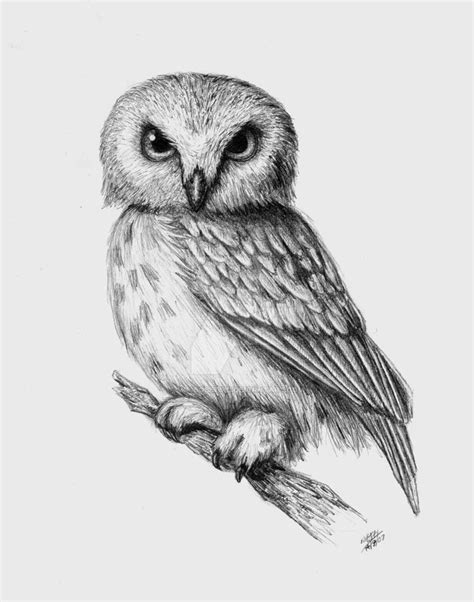 white owl cigar tattoo owl  pinterest owl coloring pages barn owls owls drawing owl