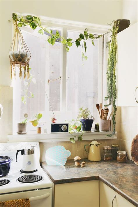 Small Plants For Kitchen Window by 17 Best Ideas About Kitchen Plants On Kitchen