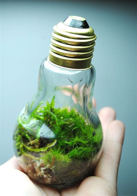 brilliant ideas    recycle light bulbs