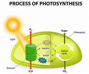 Absorbing Facts About Chloroplast You May Not Have Known