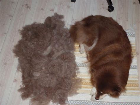 people are making new pets out of their old pet hair and