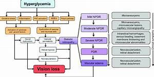 Update On Animal Models Of Diabetic Retinopathy  From