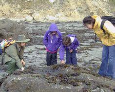 tide table brookings oregon 1000 images about oregon on pinterest tide pools