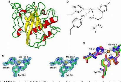 Structure Structural Lytic Activity Polysaccharide Starch Aa13