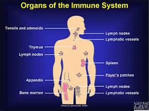 10 Interesting Immune System Facts