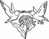 Coloring Hummingbird Flower Hummingbirds Beija Flor Printable Picaflor Colorear Flores Colorir Desenho Kolibri Desenhos Coloriage Vine Pintar Dibujo Imprimer Imprimir sketch template