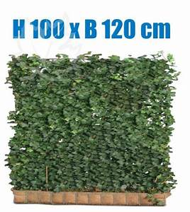 Immergrüne Hecke Pflegeleicht : efeu hecke 100 x 120 cm sichtschutz immergr ne hecke fertighecke in garten terrasse ~ Markanthonyermac.com Haus und Dekorationen