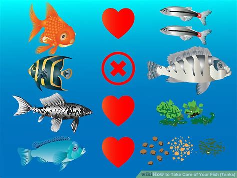 care   fish tanks  pictures