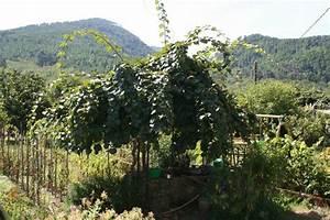 L Arbre Du Kiwi : jardin voisin au jour le jour ~ Melissatoandfro.com Idées de Décoration